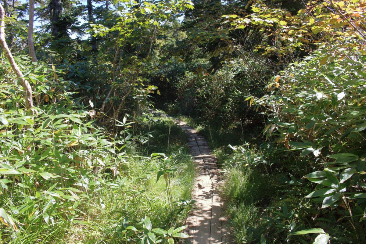 鳩待峠ルートの緩やかな登山道