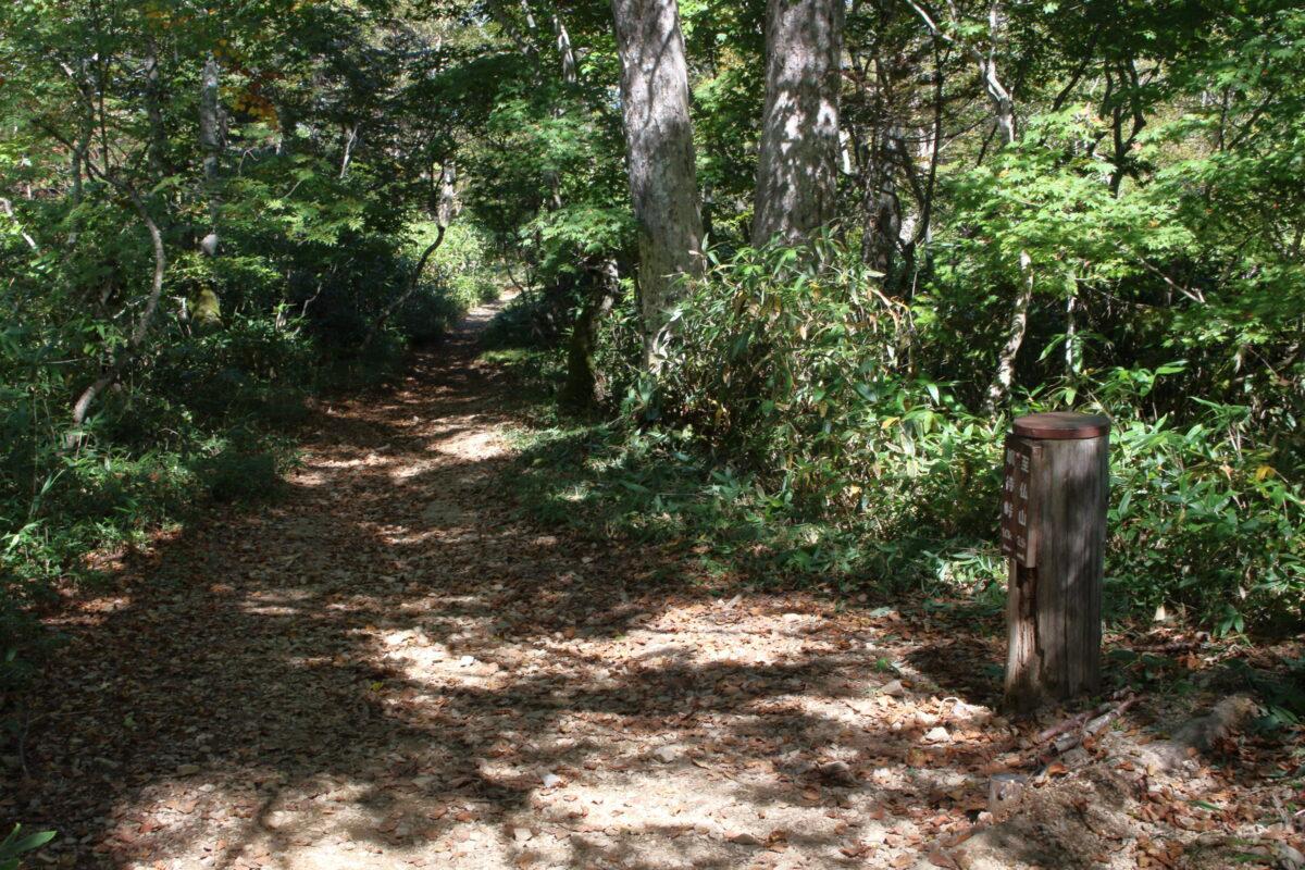 緩やかで広く歩きやすい道が続く鳩待峠ルート
