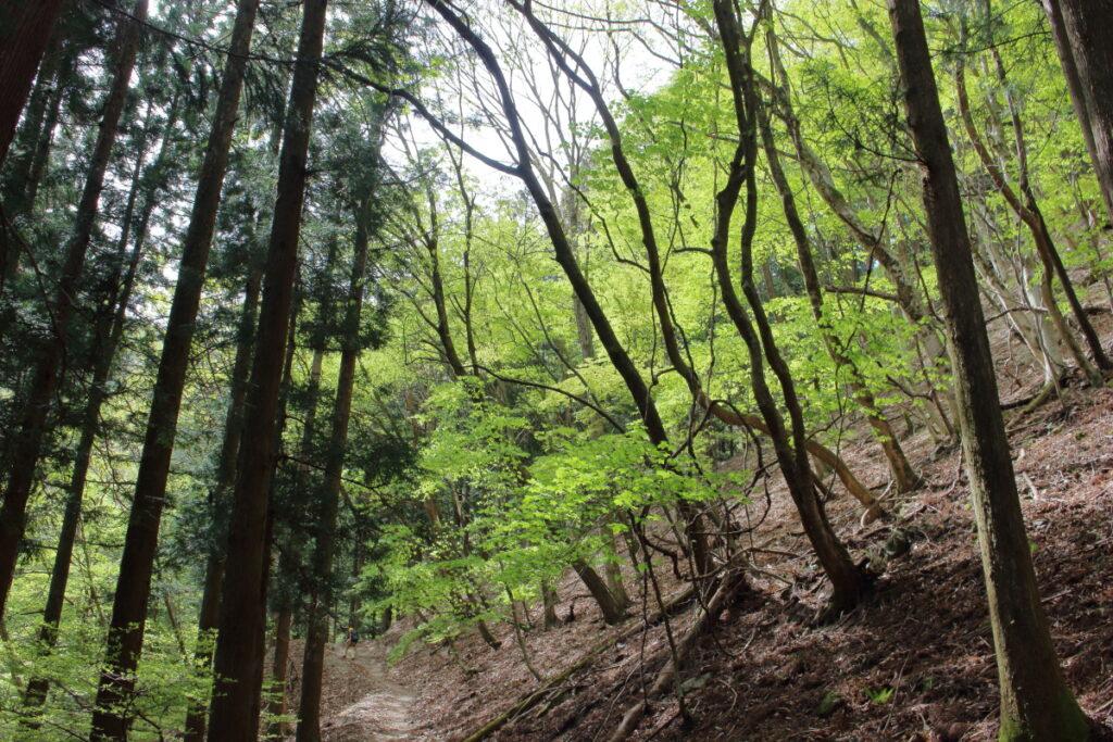 妻坂峠への登山道