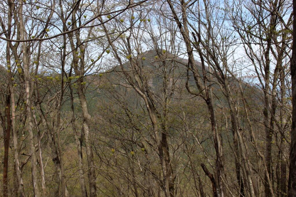 木々の向こうに武甲山を望む