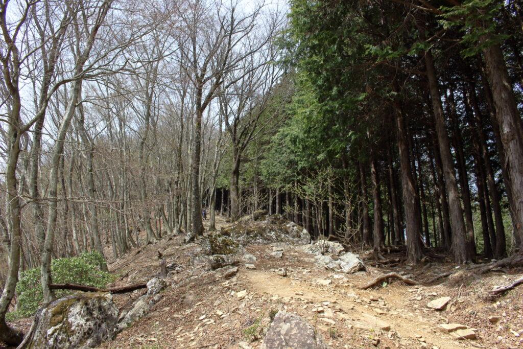 大持山への最後の急登