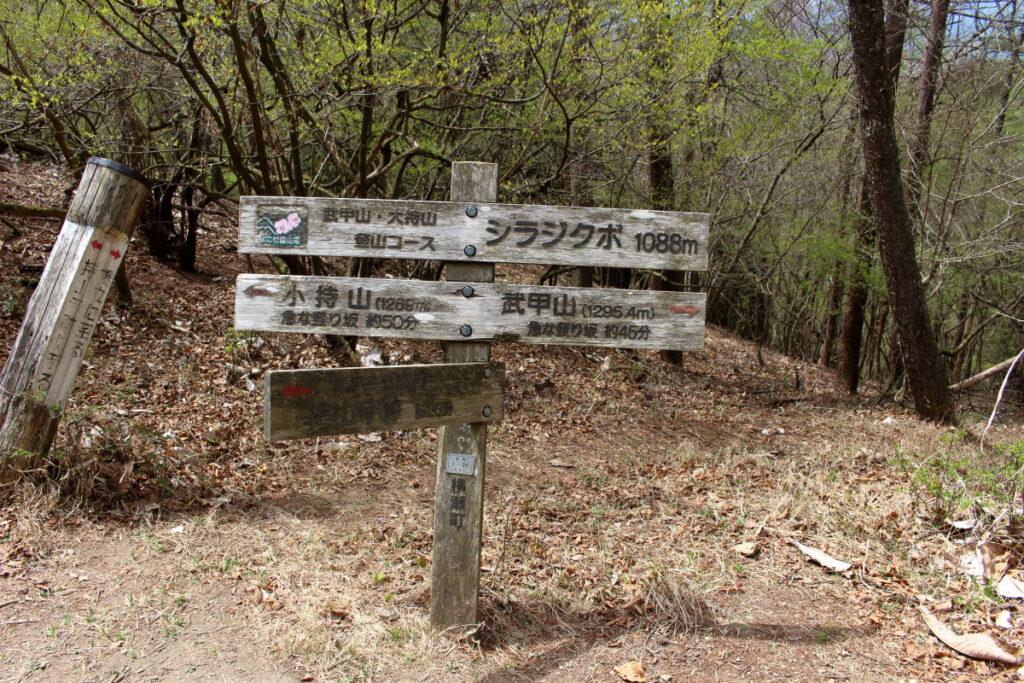 小持山~武甲山の鞍部、シラジクボ