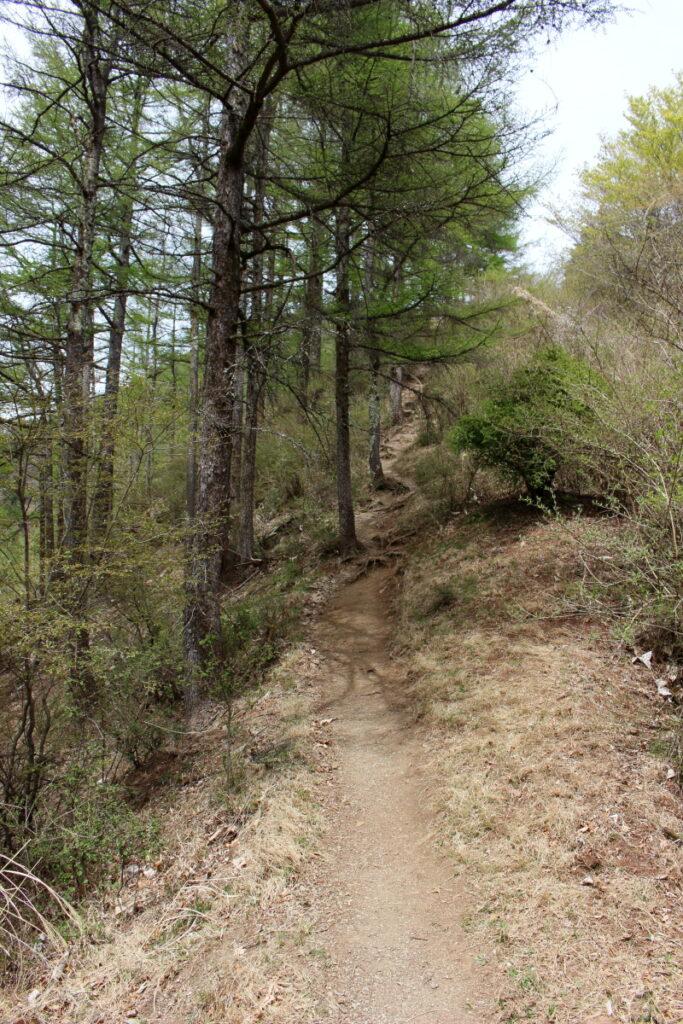 シラジクボから武甲山への登り返し
