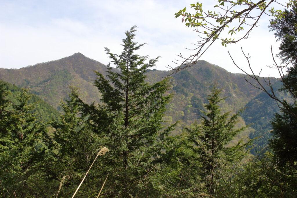 橋立コース途中からの小持山の眺望