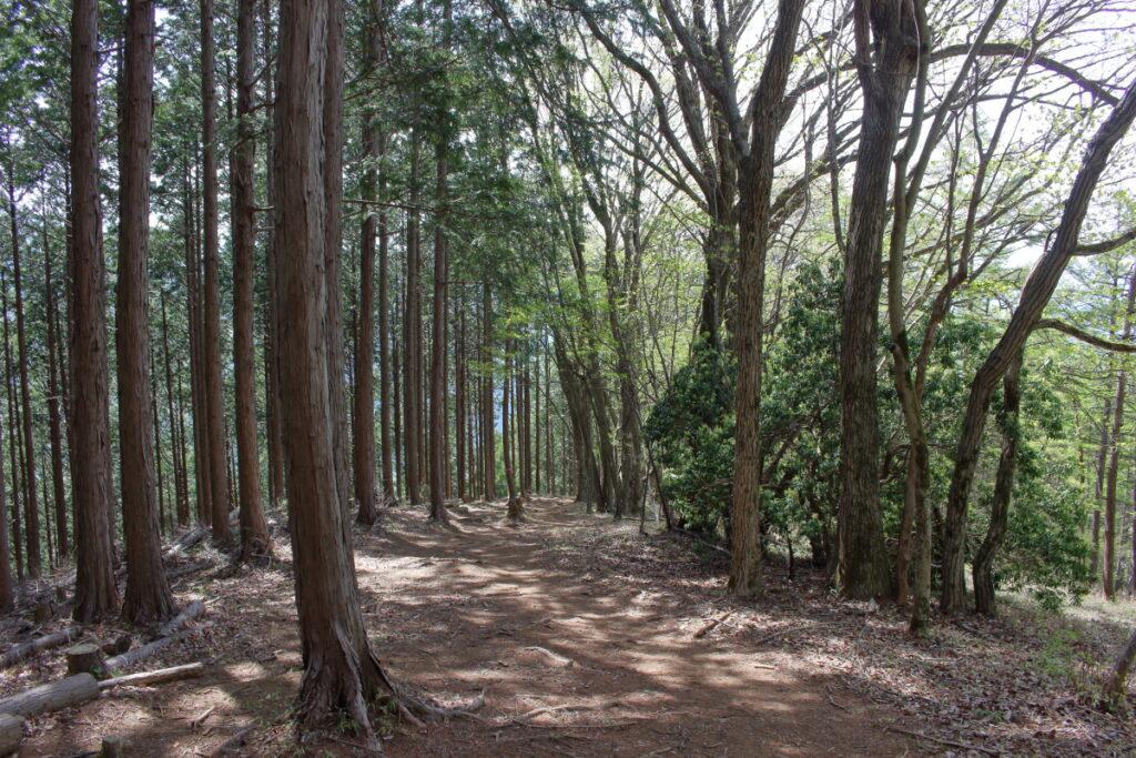 樹林帯の快適トレイル