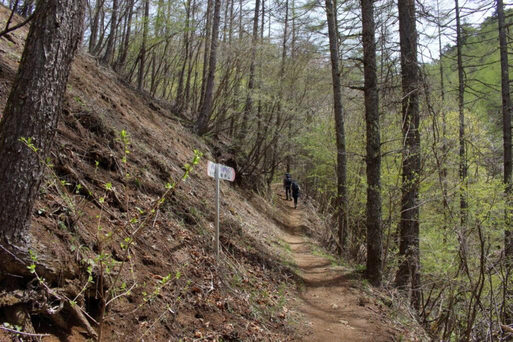 沢から離れた樹林帯の道