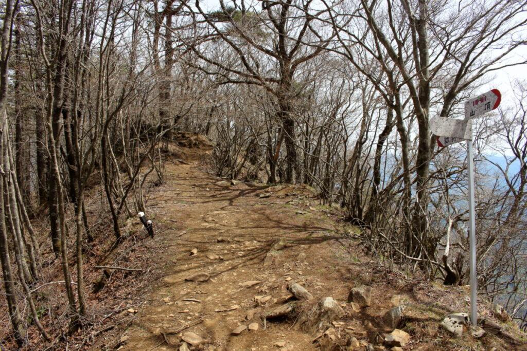 滝子山山頂直下の分岐
