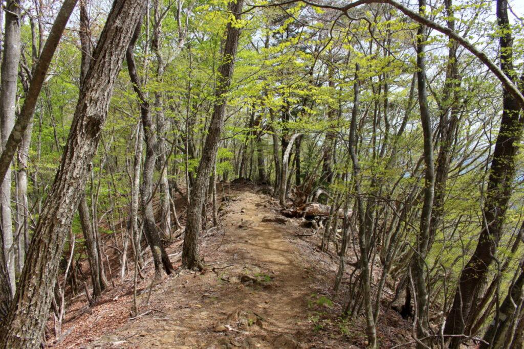 檜平から続く新緑の樹林帯