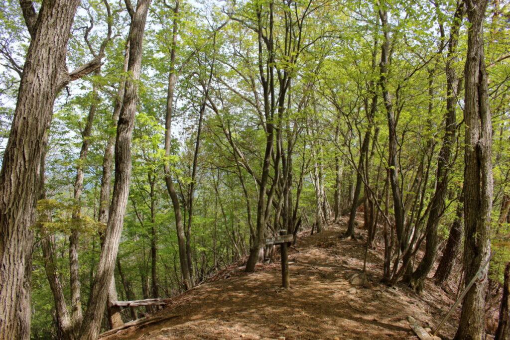 新緑に囲まれた登山道