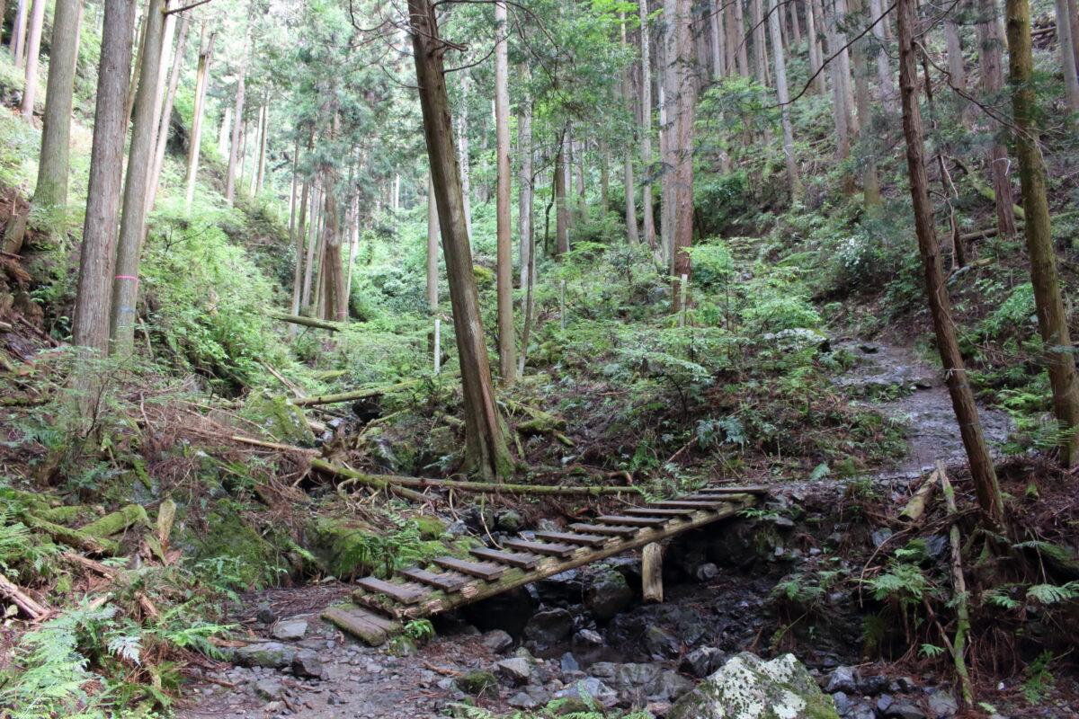 高水山への沢沿いの登山道