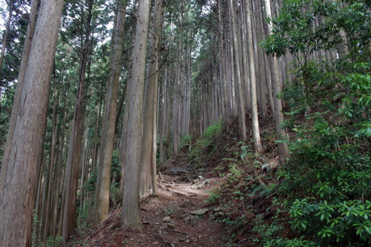 高水山への樹林帯の登山道