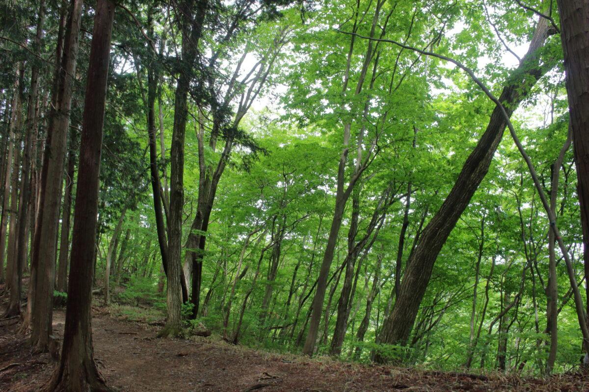 岩茸石山への新緑のトレイル