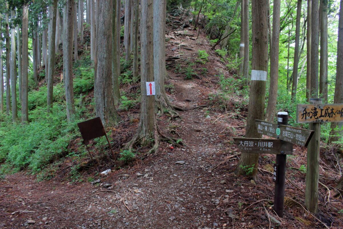 棒ノ折山への縦走路にある小ピーク