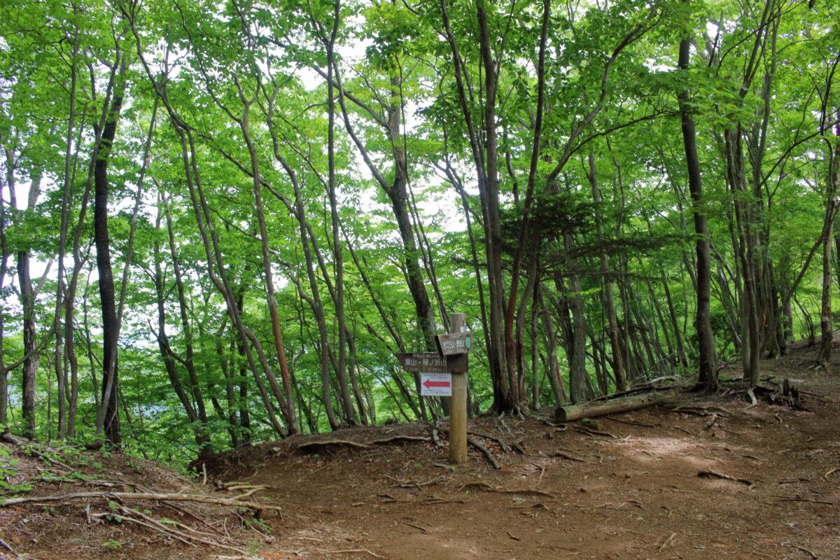 岩茸石山~棒ノ折山縦走路の道標