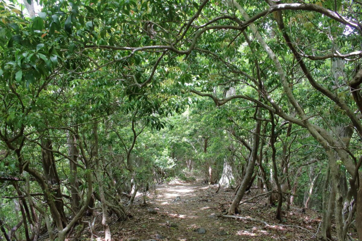 背の低い木に覆われた縦走路