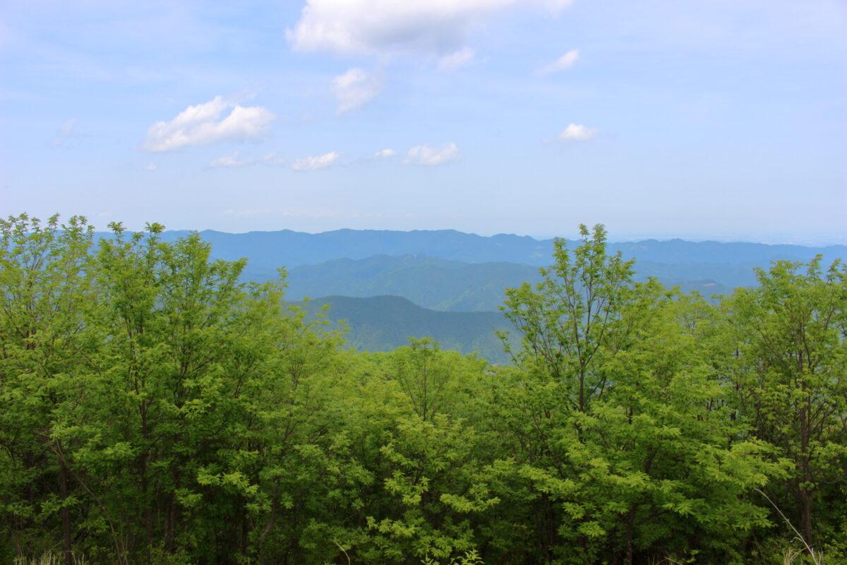 棒ノ折山山頂北側に広がる奥武蔵の山々の眺望
