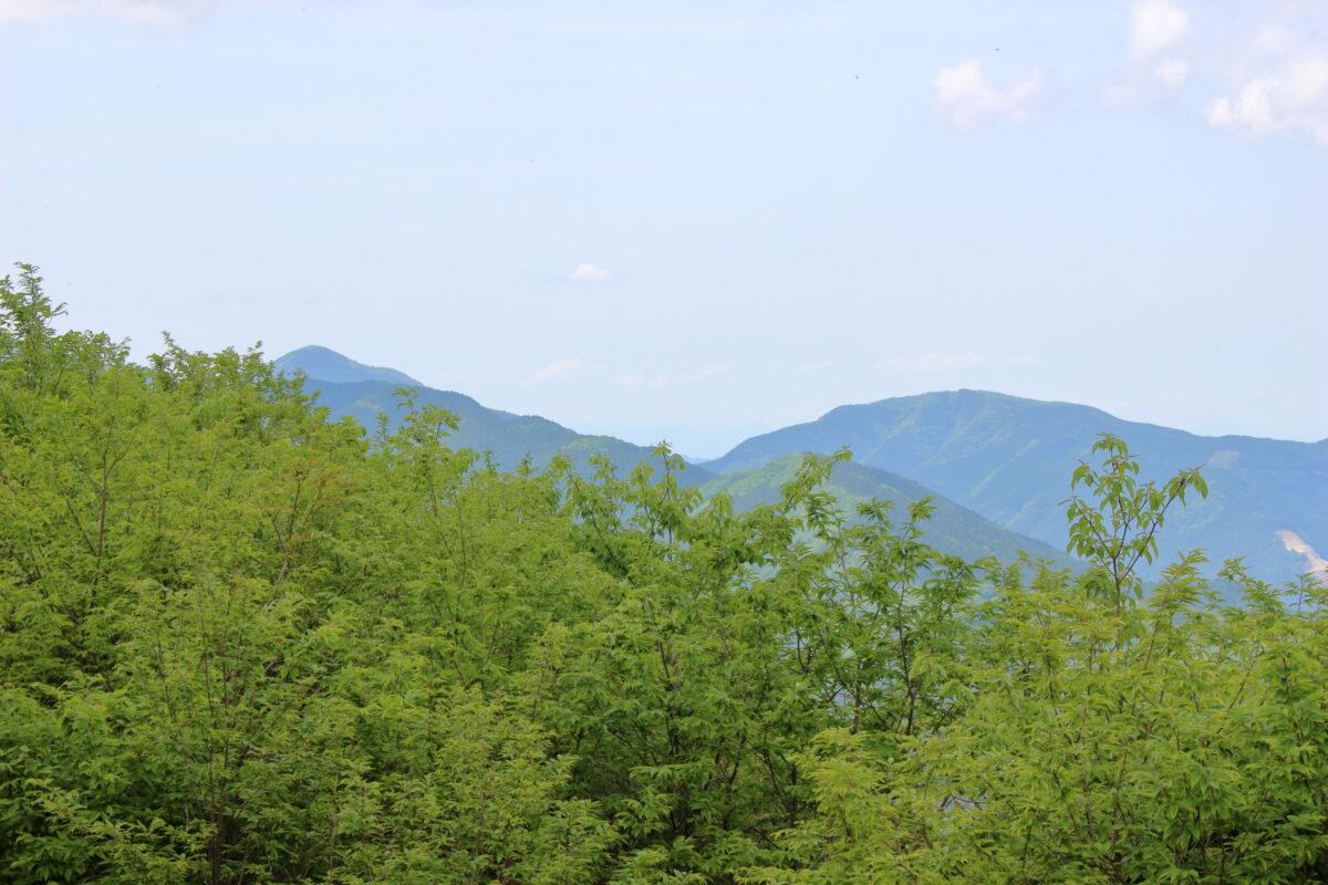 棒ノ折山山頂から大持山を望む