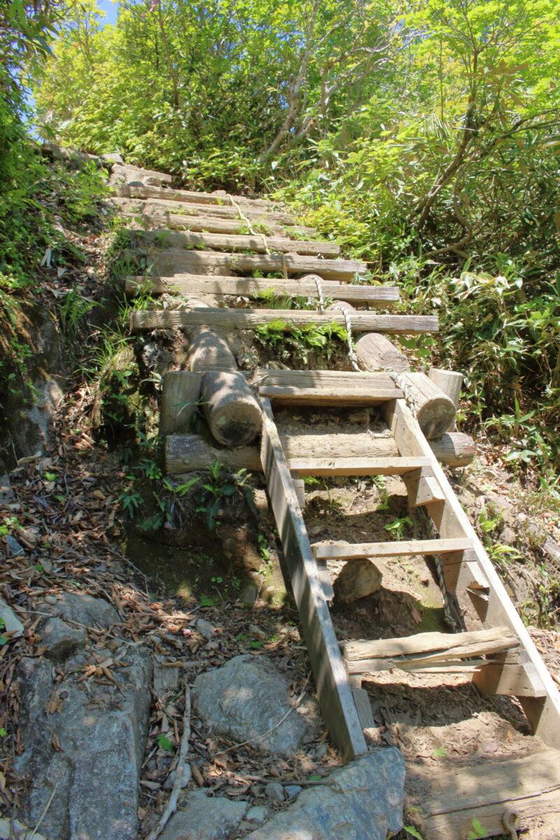 天神尾根コース樹林帯は階段が整備されています