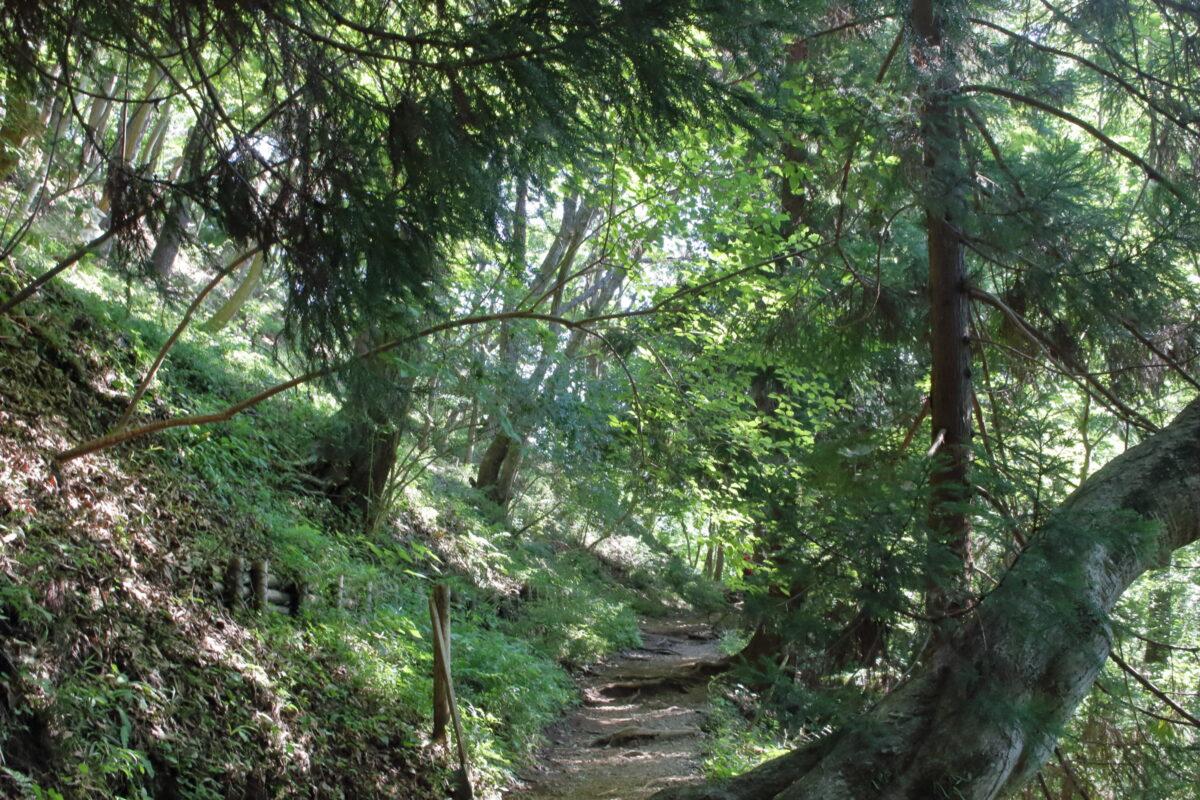 風が通らず蒸し暑い樹林帯の登山道