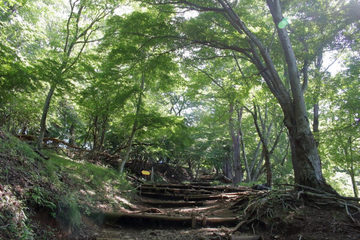 秋は紅葉が美しい樹林帯の道