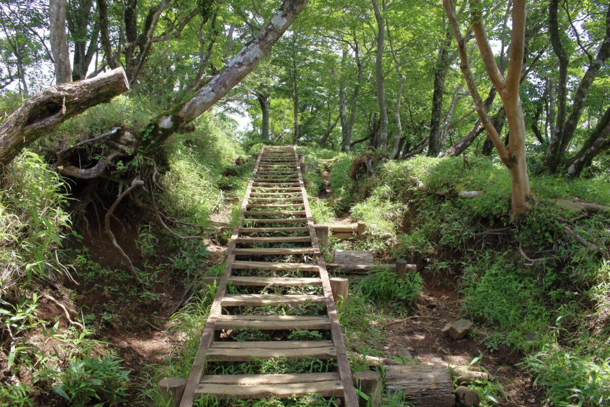 金冷しから塔ノ岳山頂までは長い階段が続く!