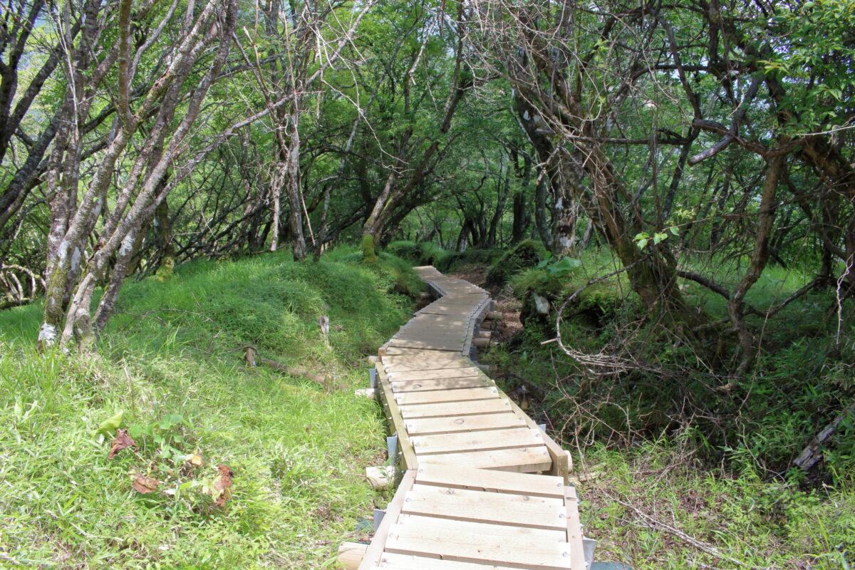 塔ノ岳山頂から木の階段を下る