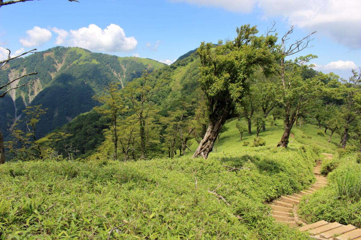 気持ち良い尾根道が続く丹沢山へのルート