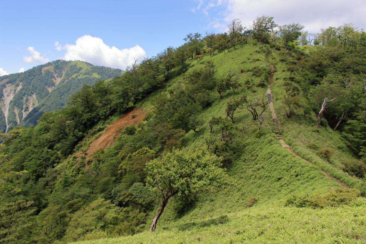 小ピークを越えるアップダウンがある丹沢山への道