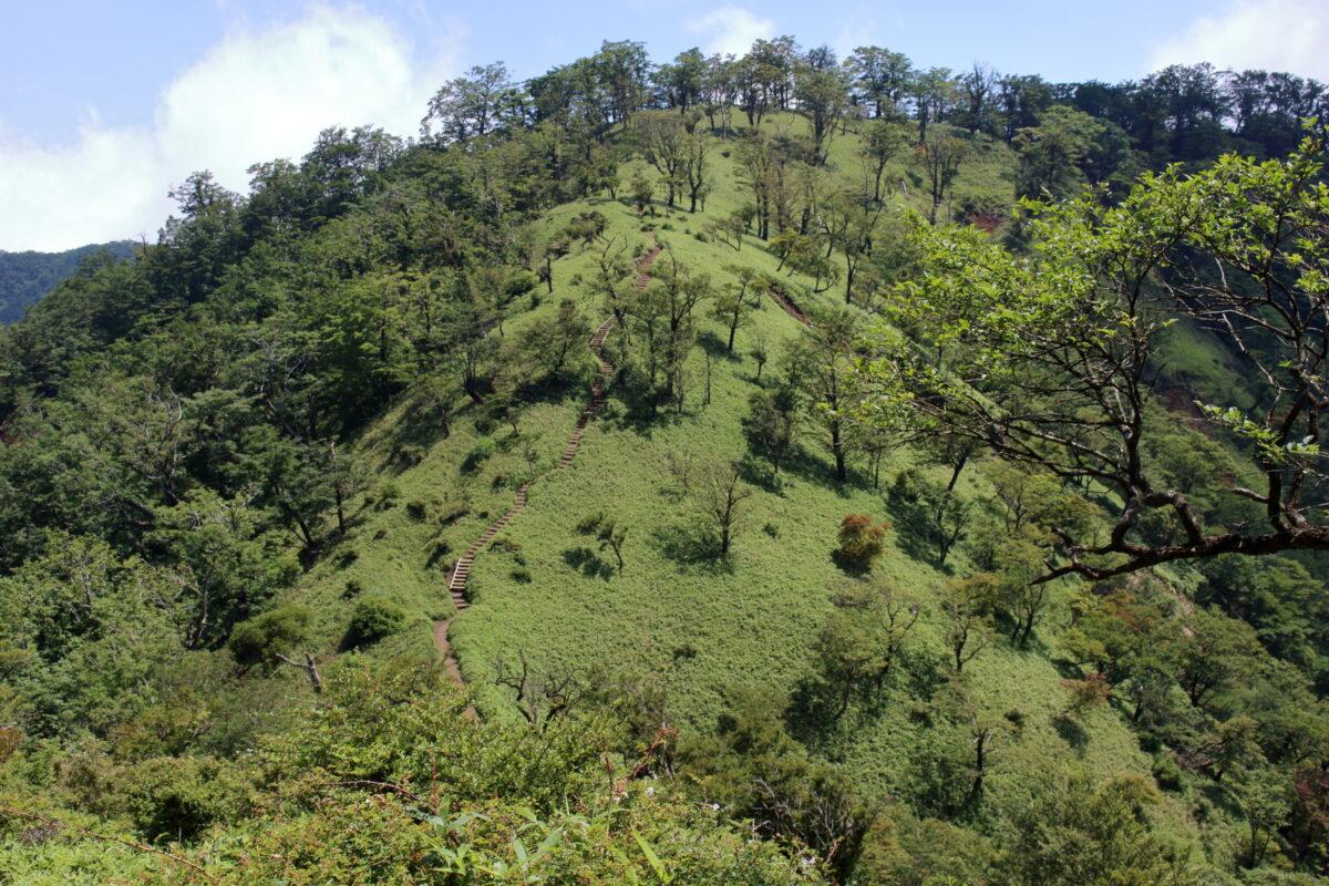稜線歩きが楽しい丹沢山~塔ノ岳の道