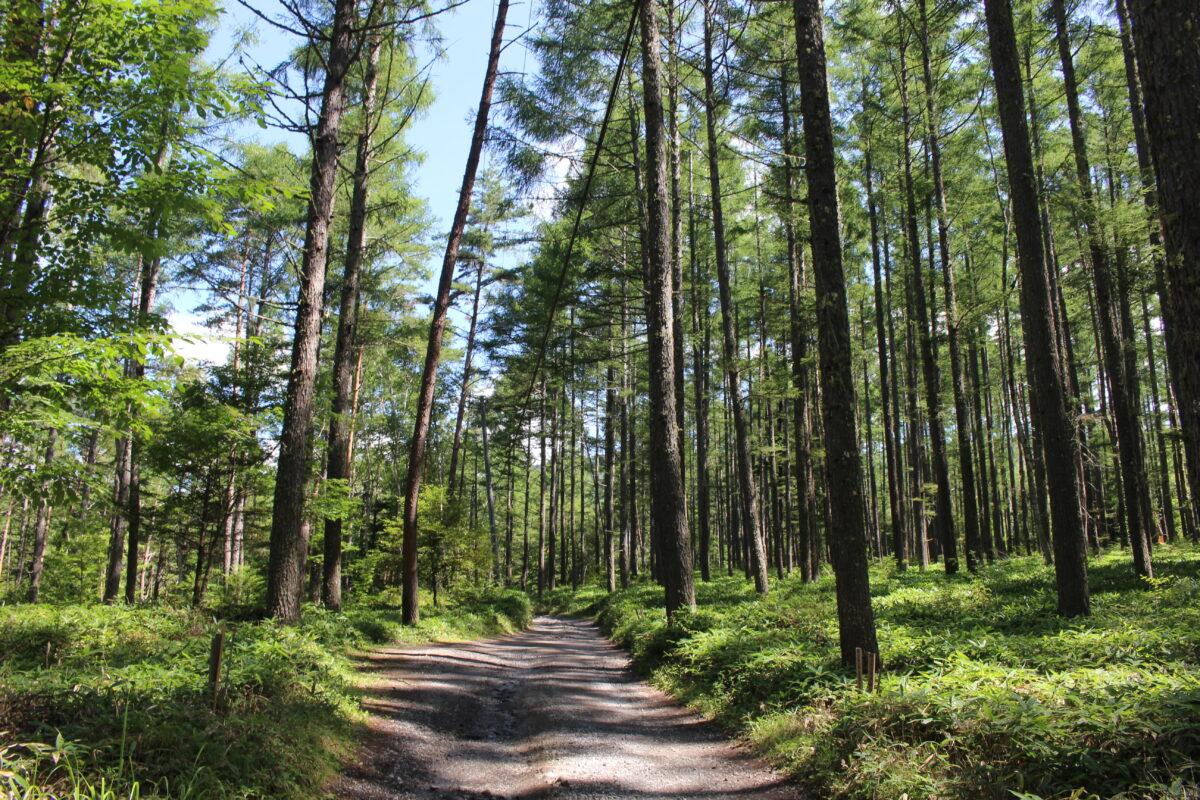 美濃戸口からしばらくは林道歩き
