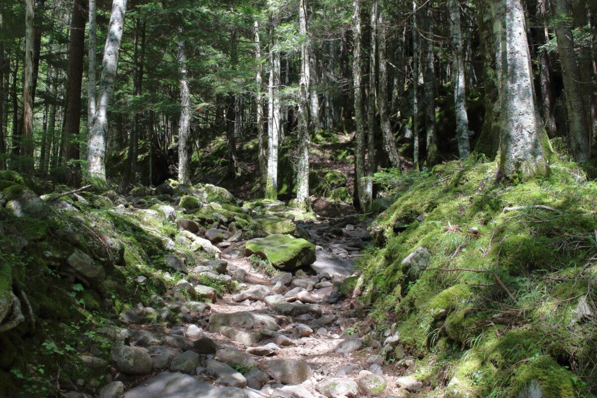 北沢コースの登山道