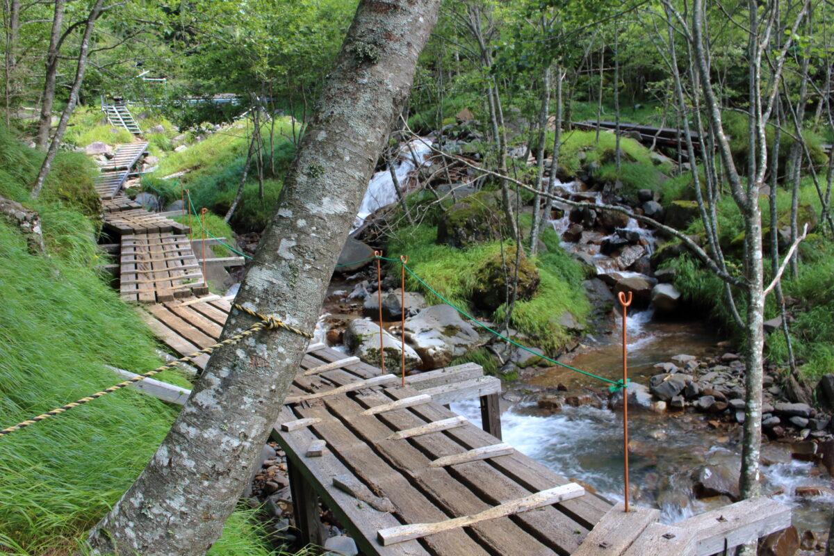 沢に沿って作られた木道