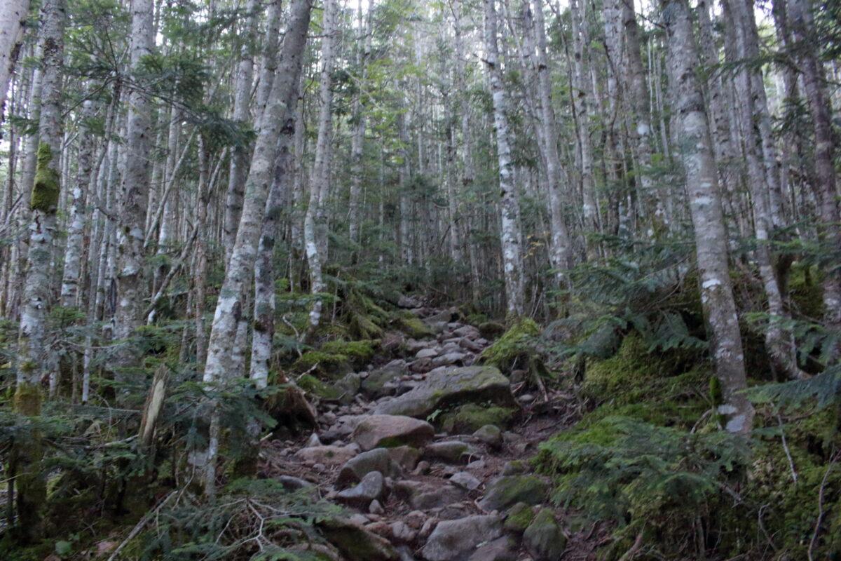 赤岳鉱泉から硫黄岳への登山道